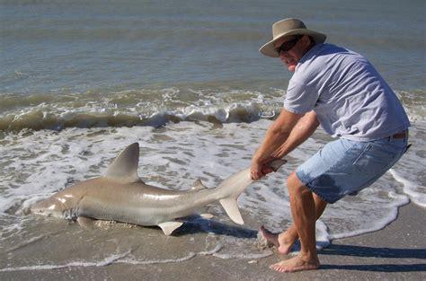 shark beach florida lifeguard sandbar pulls sea