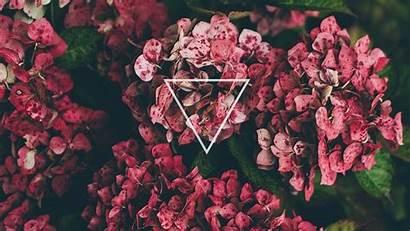 Desktop Wallpapers Flowers Girly Flower Roses Backgrounds