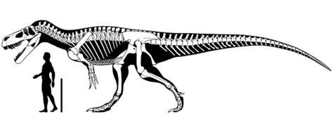 estudio atribuye una vertebra exhibida en asturias al mayor dinosaurio carnivoro de europa