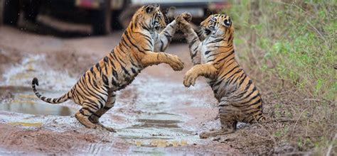 jungle birthday party reason to visit jim corbett national park why to visit