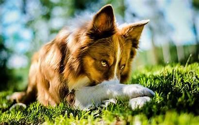 Grass Dog Animals Field Depth Bokeh Wallpapers