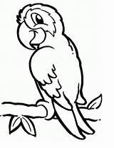 Coloring Parrots Pages Print Parrot Animal sketch template