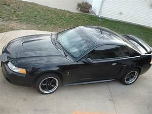 99 Ford Mustang SVT Cobra For Sale