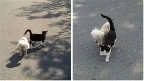 un petit chien dans la rue ce chat guide un petit chien aveugle pour le prot 233 ger dans la rue