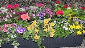 Blumenkübel Bepflanzen Sommer : blumenkasten balkon bepflanzen wd48 startupjobsfa ~ Eleganceandgraceweddings.com Haus und Dekorationen