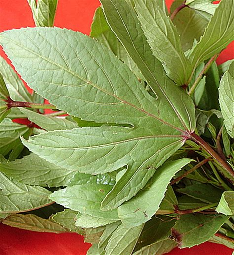 gongura mutton mutton cooked  red sorrel leaves indian food recipes food  cooking blog