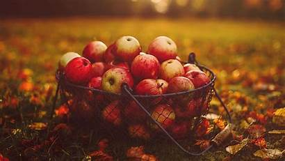 Apples Apple Basket Harvest Autumn Festival National