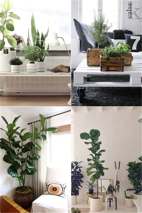decoaddict fluor inspiration addict en decoaddict plantas de interior decoaddict addict