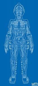 Metropolis Robot Anatomy  Blueprint