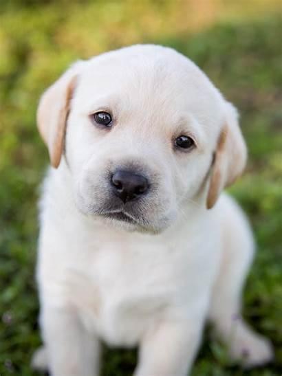Puppy Cutest Ever Aww