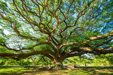 Tree Backgrounds by Amazing Tree Wallpaper Gallery