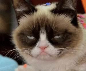 Grumpy Cat GIF by Internet Cat Video Festival - Find ...