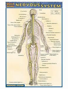 Barcharts Nervous System Pocket Guide