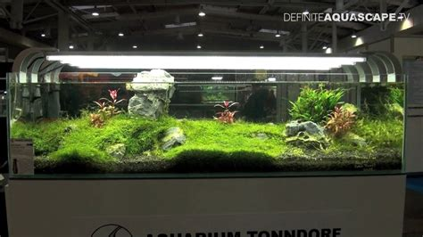 aquarium landscape ideas