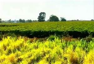 Kadavanchi, a village in Maharashtra makes itself drought ...
