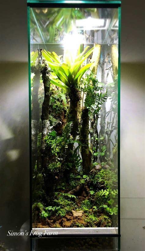 images  vivarium terrarium  pinterest