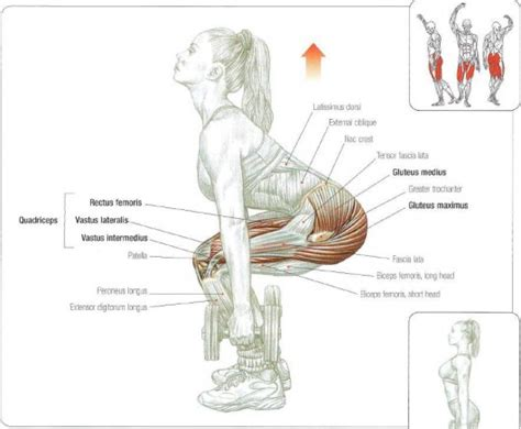 exercises butt muscle squats glutes workouts workout dumbbell squates exercise building strength nine fitness dumbell system booty training medius strengthen