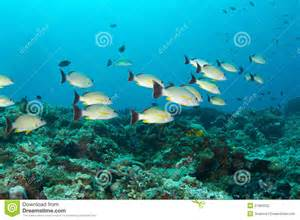 Tropical Fish Coral Reef