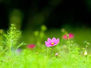 Beautiful Green Grass Landscape Wallpaper Iranews ...