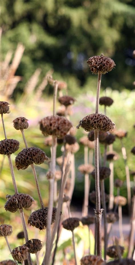 Garten Herbst Stauden Schneiden by Welche Stauden Im Herbst Pflanzen Wohn Design