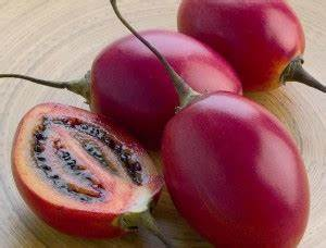 importanta fructelor