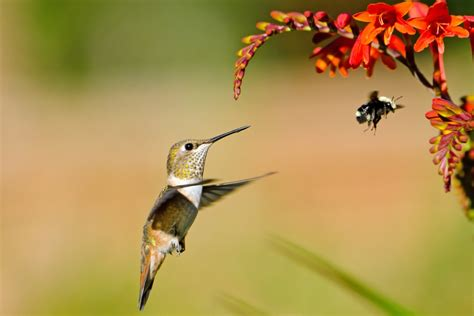 What Is The 'birds And The Bees'?