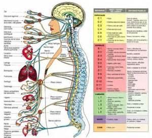 nuestrasaludesprimero - FISIOLOGIA ANATOMICA COLUBNA VERTEBRAL  Osteoporosis Traditional Chinese Medicine