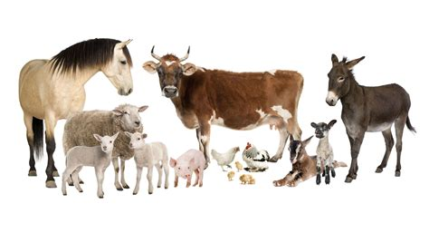 Farm Animal Wallpaper - farm animals wallpapers backgrounds