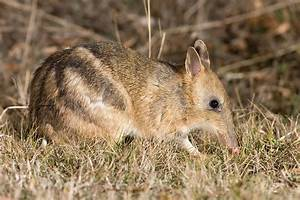 Image Gallery names of marsupial animals