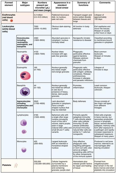 erythrocytes anatomy  physiology
