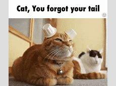 Pin von Kevin O'Casey auf ️gif Pinterest Katzen, Tier