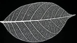 How to make leaf skeletons MNN - Mother Nature Network