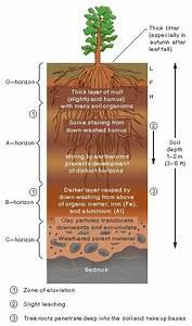 Soil Layers Diagram  Good Galleries