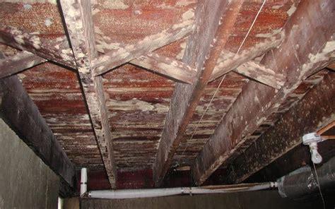 excellent design ideas mold  floor joists  basement