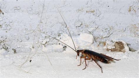 Schaben Und Kakerlaken Im Haus Loswerden by Kakerlaken Welche Krankheiten K 246 Nnen Sie 252 Bertragen