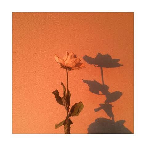 item  polyvore orange aesthetic  wallpaper