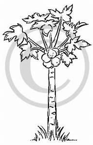 Papaya Tree Clipart Black And White | www.pixshark.com ...