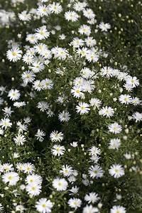 Weiß Blühende Stauden : wei e blumen f r schattige beete garten bepflanzen gartenarbeit und pflanzen ~ Watch28wear.com Haus und Dekorationen