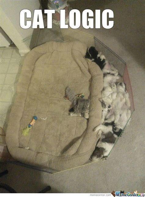 cat logic memes  cat owners  understand
