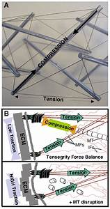 Tensegrity I  Cell Structure And Hierarchical Systems Biology