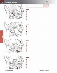 Muscle Manual Anatomy Workbook
