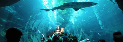 le plus grand aquarium de top 10 des plus grands aquariums du monde