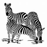 Zebre Zebra Coloriage Zebres Animals Zebras Drawing Dessin Animal Coloring Clipart Cebra Colorier Animaux Imprimer Dessins Vasarely Sticker Africa Stickers sketch template