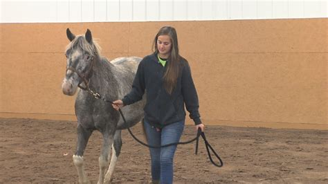 wham training new equine training and rehab center opens at lollypop