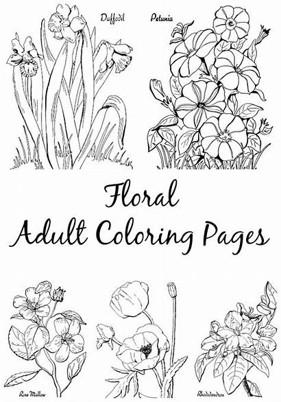 Coloring Adult Pages Floral Fairy Colouring Graphics