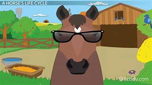 Resume Spanish Teacher Life Cycle Of A Horse Lesson For Kids Video Lesson