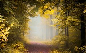 Nature, Landscape, Fall, Path, Forest, Mist, Morning