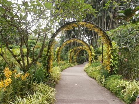 singapore botanic gardens singapore botanic gardens 2018 all you need to