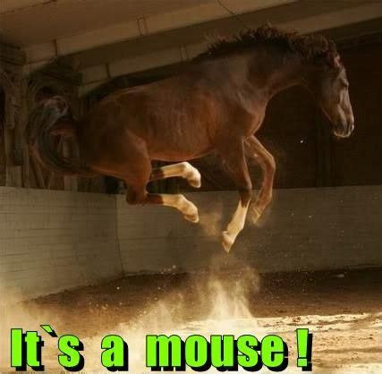 scared mouse funny horses horse memes cute meme jumping mini looks animal mice animals silly rat quotes jokes kulfoto humor