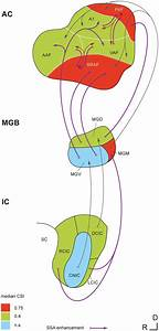 Emergence Of Ssa In The Nonlemniscal Auditory Pathway